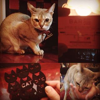 あくびちゃん(Bar黒猫)