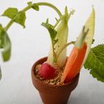 小さな野菜畑