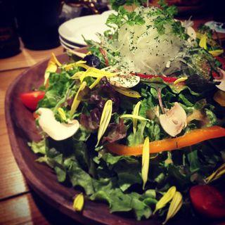 HONOサラダ(ホノガーデン)
