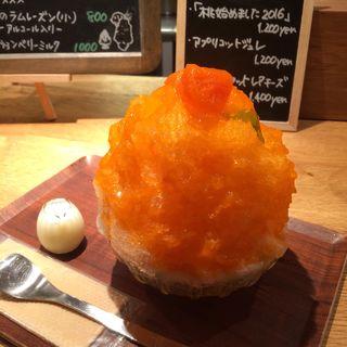アプリコットジュレ(氷屋ぴぃす )