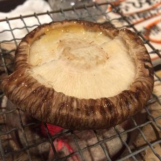 どんこ椎茸炭火焼(ひしゅうや)