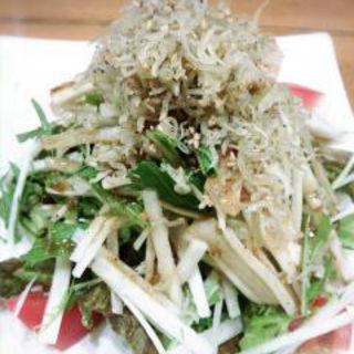 じゃこと水菜と大根のサラダ(居酒商 古典家)