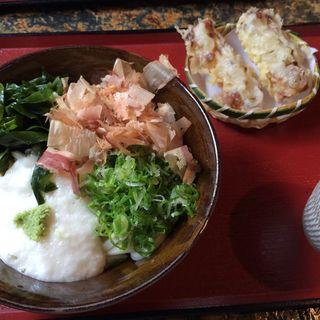 山かけの並(製麺練場 風布うどん (せいめんれんじょう ふうぷうどん))