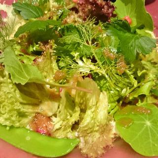 野菜サラダ(オールド コースト プリュス (OLD COAST Plus+))