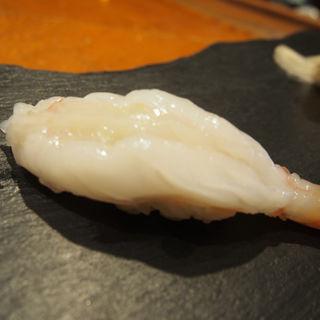 白牡丹エビ(亀喜寿司 (かめきずし))