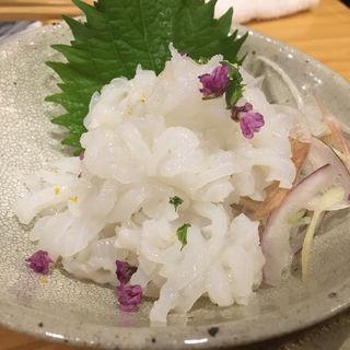 """""""北海道""""活!生タコ刺(銀座魚勝 (GINZA UOKATSU))"""