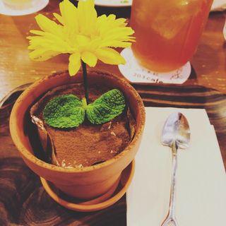 植木鉢ココアティラミス(203cafe+ (ニーマルサンカフェプラス))