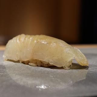 鱸(鮨猪股)