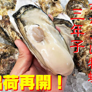 生牡蠣(宮城県産ちちこい牡蠣)