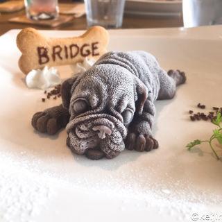 Chocolate mousse Real Dog Ice Cream Mr. KIM(ブリッジ (BRIDGE))