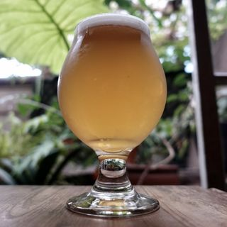 Yorocco Woody Smith Lager Bier