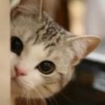 macaron_maca